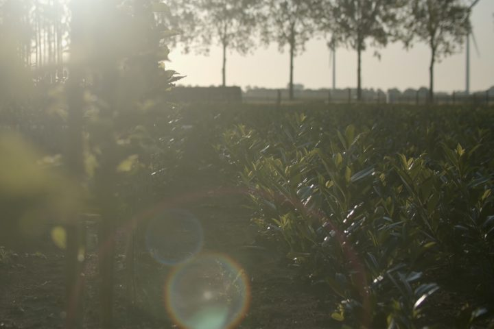 bomenenzo-bedrijfsfilm